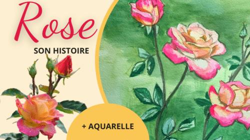 image sur la vidéo histoire et aquarelle de la rose