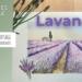 miniature de la vidéo comment peindre un champ de lavandes